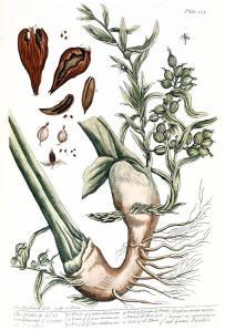 cardamom-1735-granger